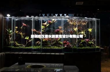 深圳大堂雨林缸