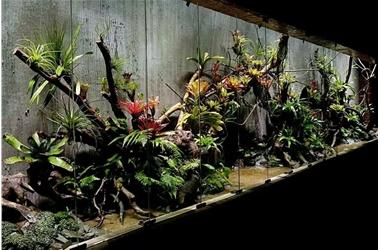 大型雨林缸