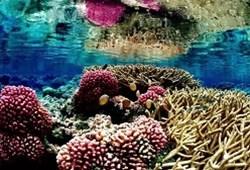 科学家发现珊瑚生长模式并不随机