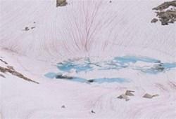"""神秘""""粉雪""""促使全球冰川快速融化"""